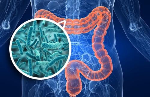Il microbiota intestinale e probiotici